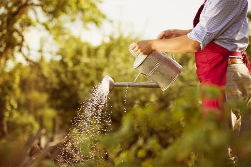 Diseño & mantenimiento de jardines